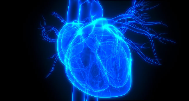 Variations Found in 'Normal' Resting Heart Rate